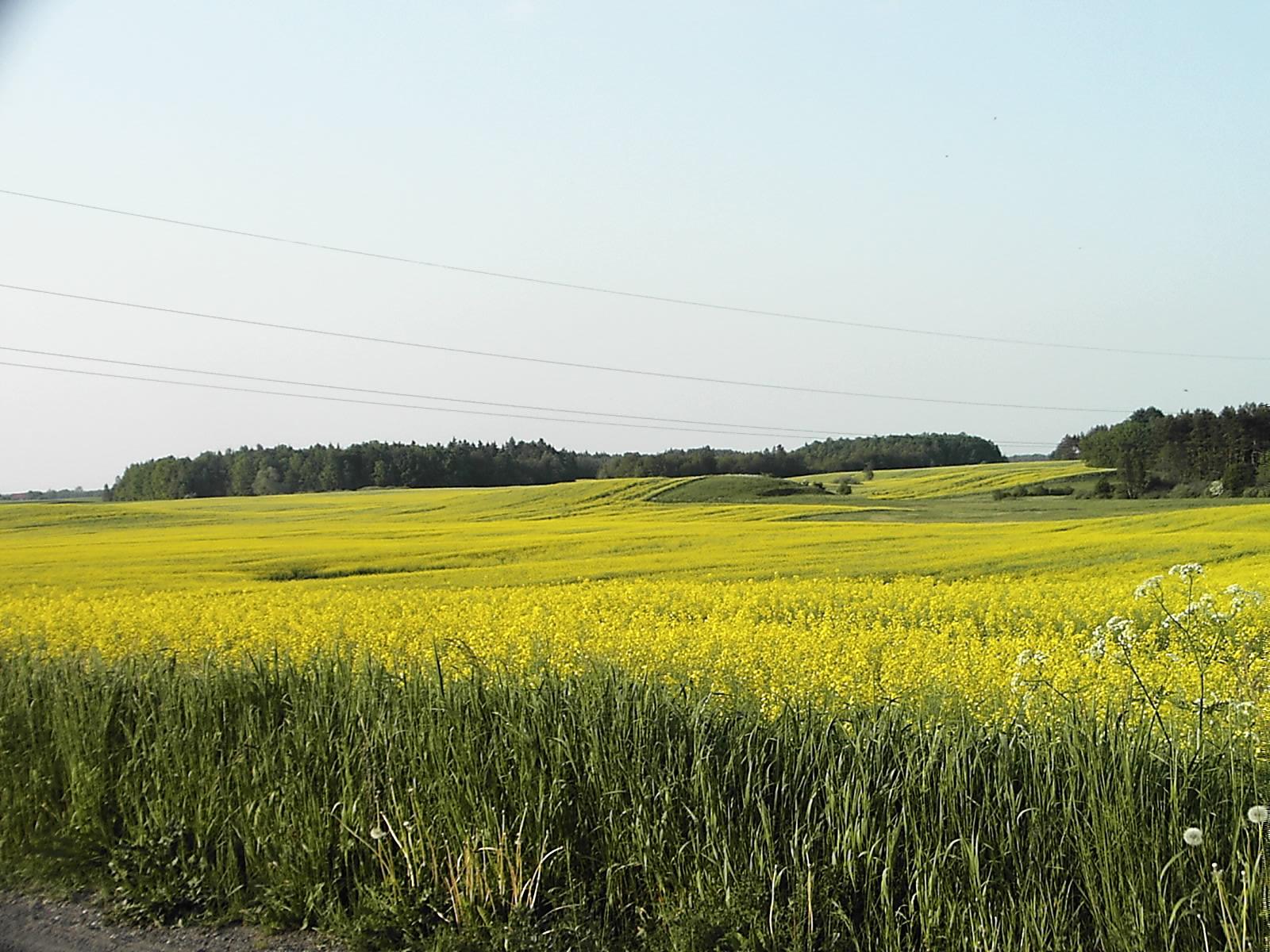 Grunt rolny 15,7 ha na Mazurach koło Olecka